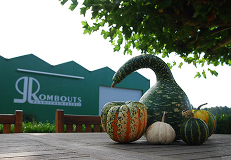 Website Rombouts planten